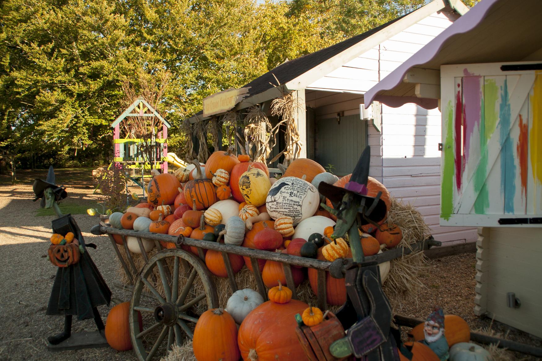 Crockford Bridge farm, west byfleet, weybridge, surrey, halloween, wonder woods, theatre, pumpkin patch