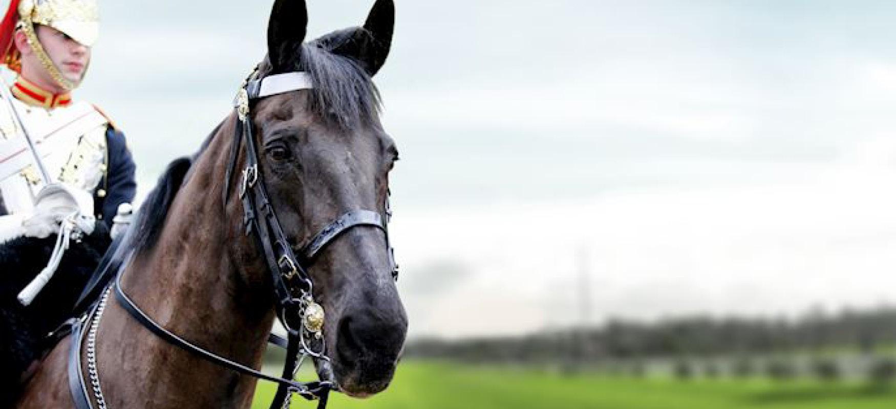 sandown horseracing, surrey, esher, jockey club